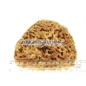 Extra Large Natural Sea Sponge